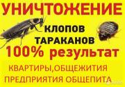 Цены на дезинсекцию(уничтожение тараканов, клопов, блох) квартир и домов