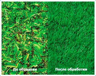 Техника использования гербицидов